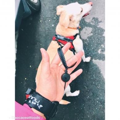 Поводок-рулетка Lishinu 2 Original для собак